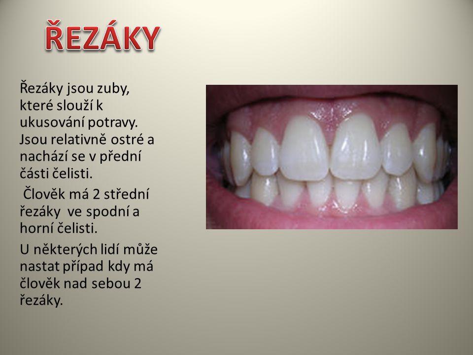 ŘEZÁKY Řezáky jsou zuby, které slouží k ukusování potravy. Jsou relativně ostré a nachází se v přední části čelisti.
