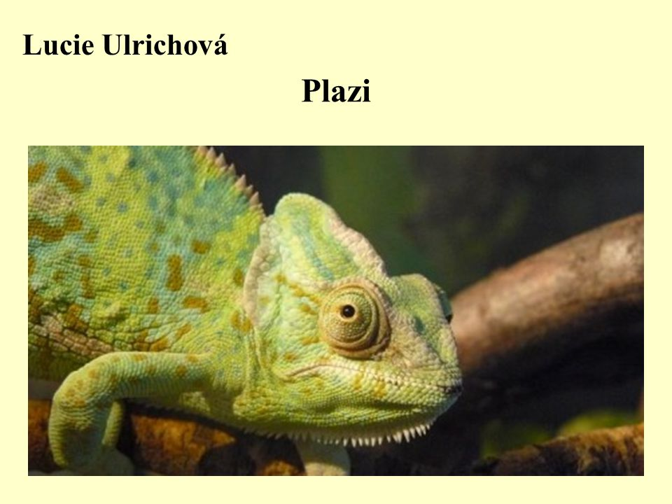 Lucie Ulrichová Plazi