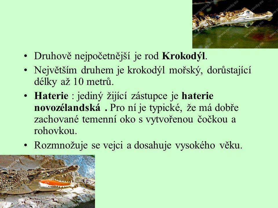 Druhově nejpočetnější je rod Krokodýl.
