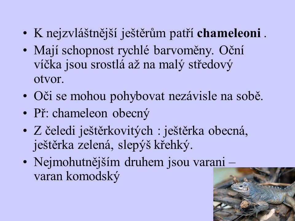 K nejzvláštnější ještěrům patří chameleoni .