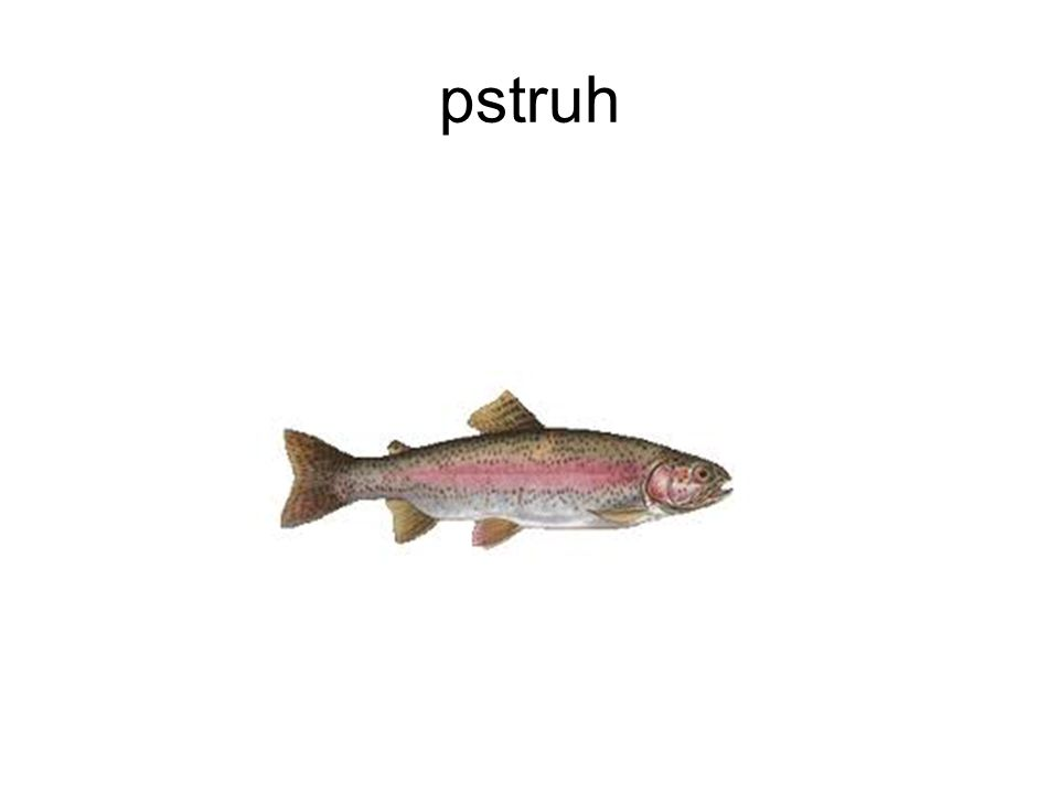 pstruh