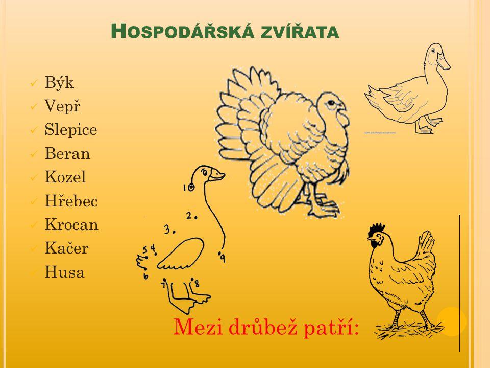 Mezi drůbež patří: Hospodářská zvířata Býk Vepř Slepice Beran Kozel