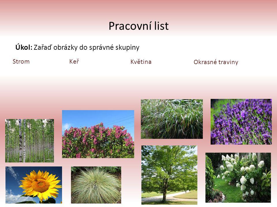Pracovní list Úkol: Zařaď obrázky do správné skupiny Strom Keř Květina