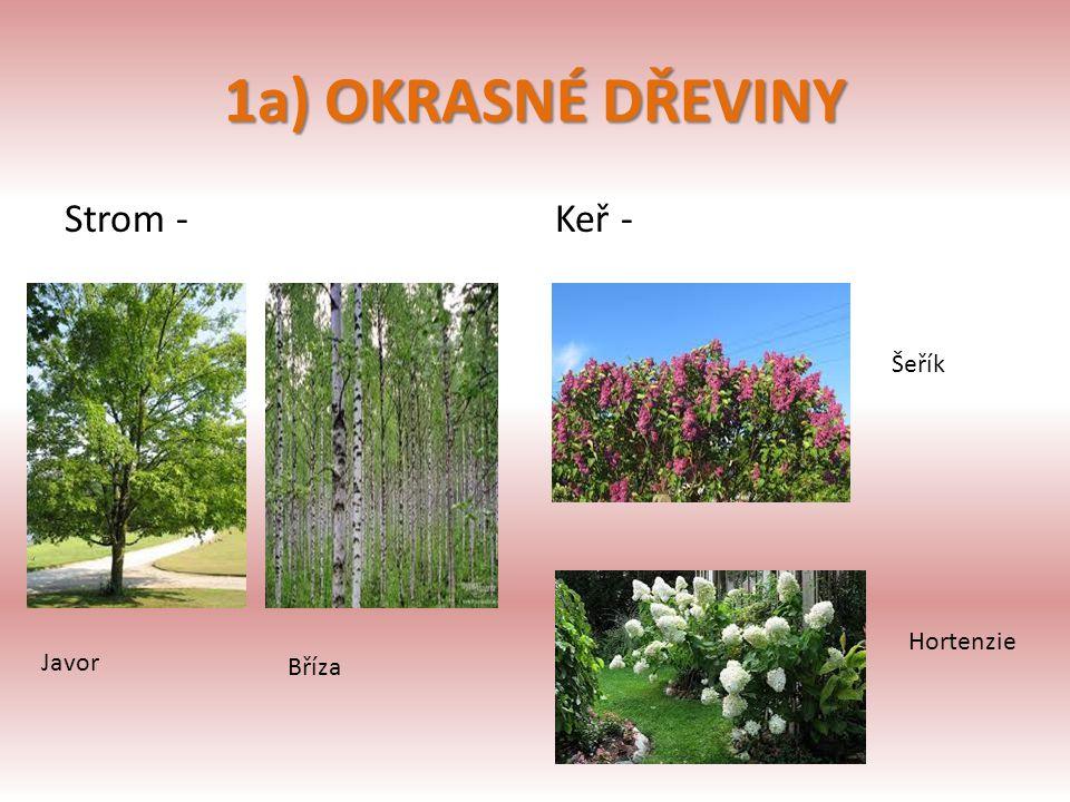 1a) OKRASNÉ DŘEVINY Strom - Keř - Šeřík Hortenzie Javor Bříza