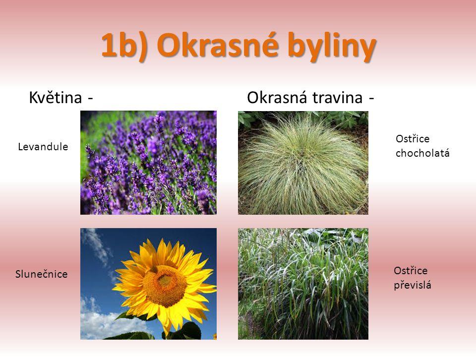1b) Okrasné byliny Květina - Okrasná travina - Ostřice Levandule