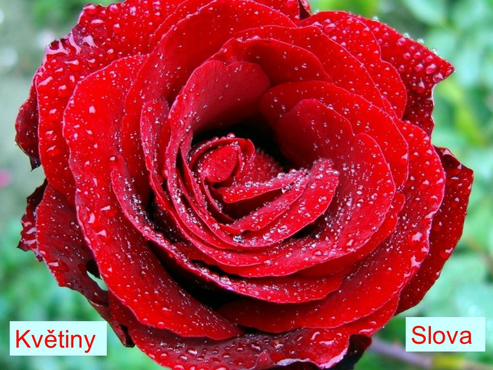 Slova Květiny