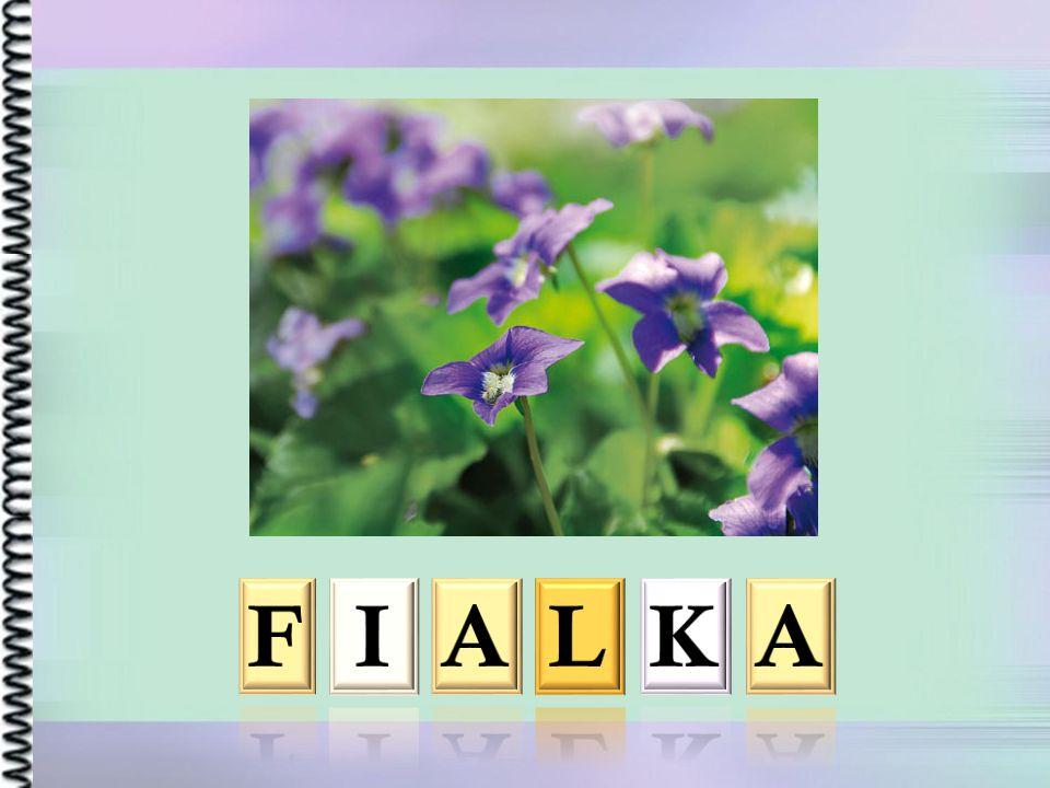 F I A L K A