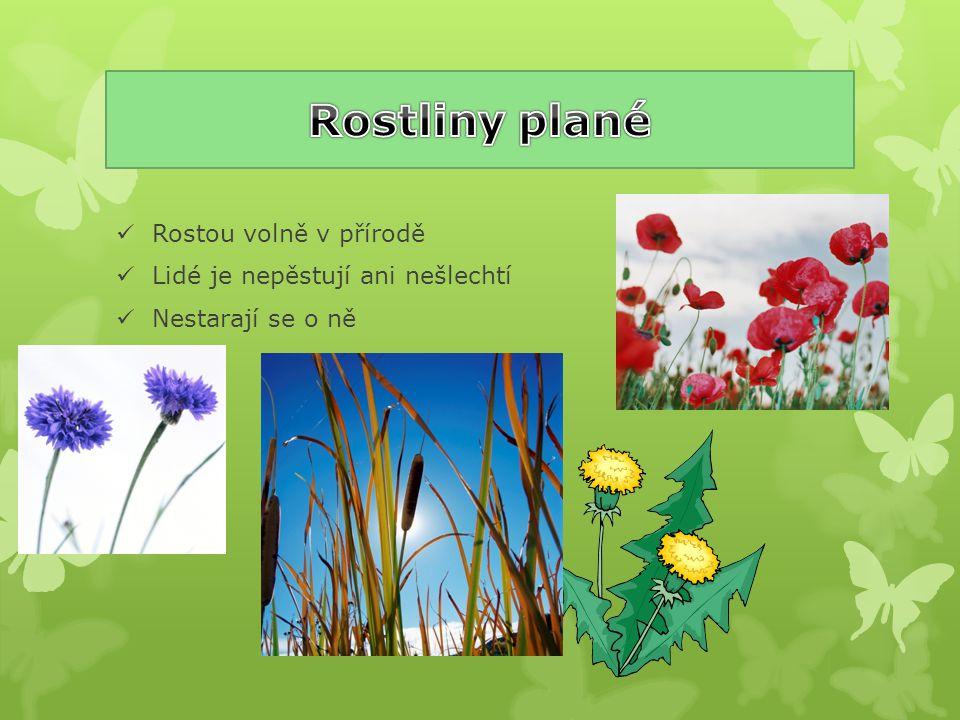 Rostliny plané Rostou volně v přírodě Lidé je nepěstují ani nešlechtí