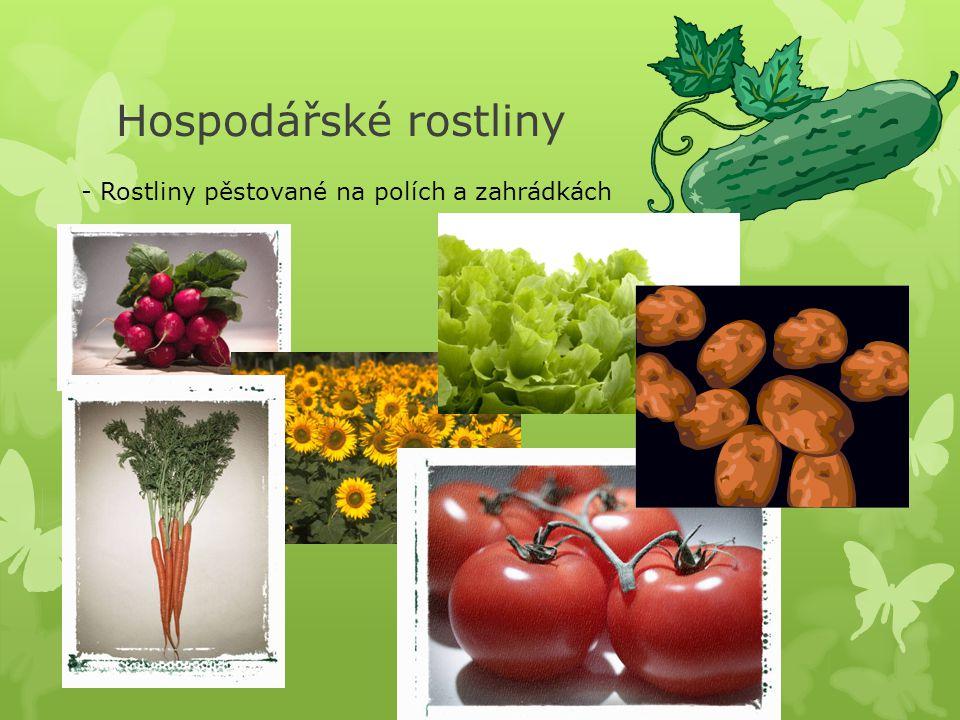 Hospodářské rostliny - Rostliny pěstované na polích a zahrádkách