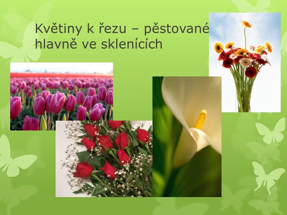 Květiny k řezu – pěstované hlavně ve sklenících