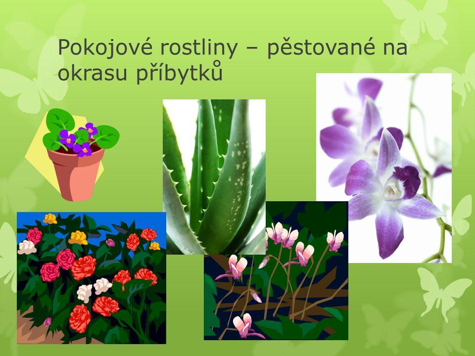 Pokojové rostliny – pěstované na okrasu příbytků