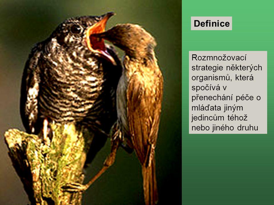 Definice Rozmnožovací strategie některých organismů, která spočívá v přenechání péče o mláďata jiným jedincům téhož nebo jiného druhu.