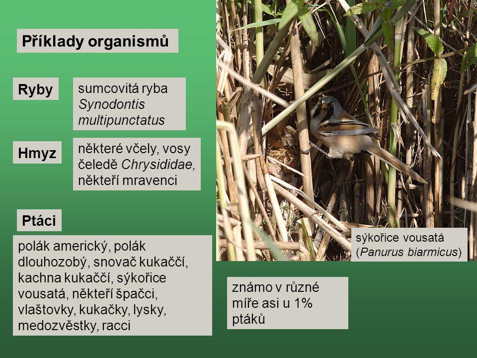 Příklady organismů Ryby Hmyz Ptáci