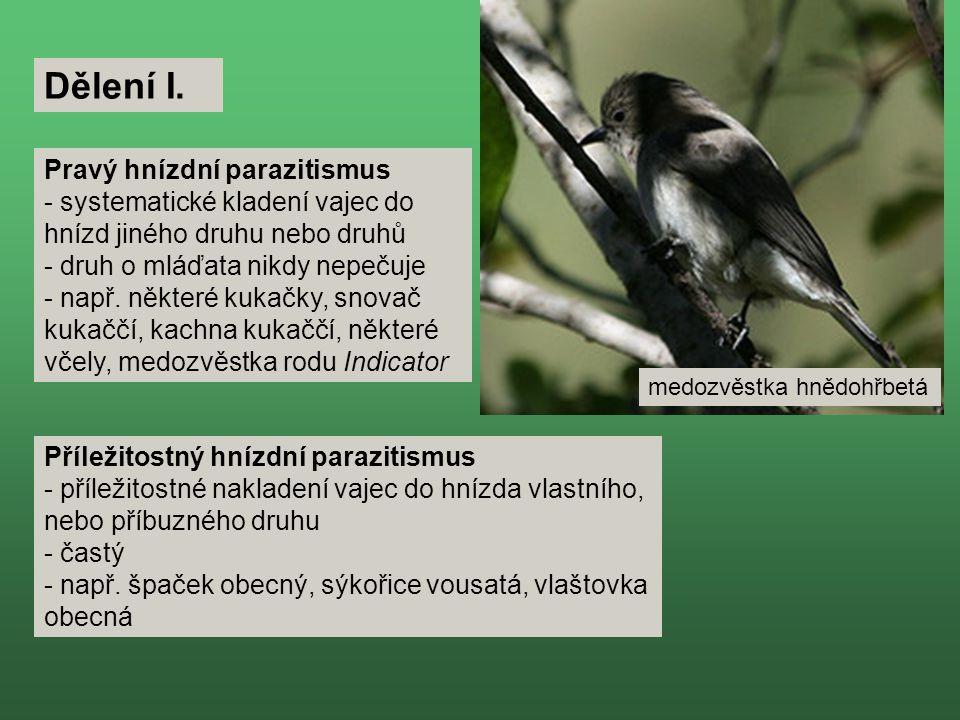 Dělení I. Pravý hnízdní parazitismus
