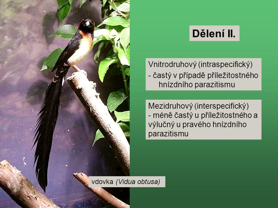 Dělení II. Vnitrodruhový (intraspecifický)