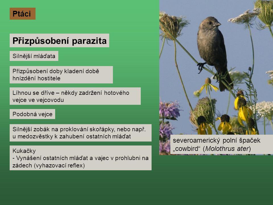 Přizpůsobení parazita