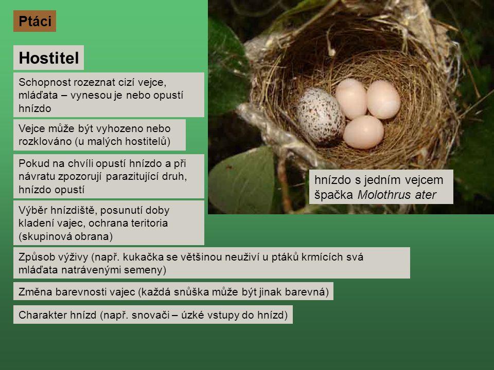Hostitel Ptáci hnízdo s jedním vejcem špačka Molothrus ater