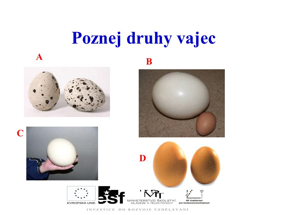 Poznej druhy vajec A B C D