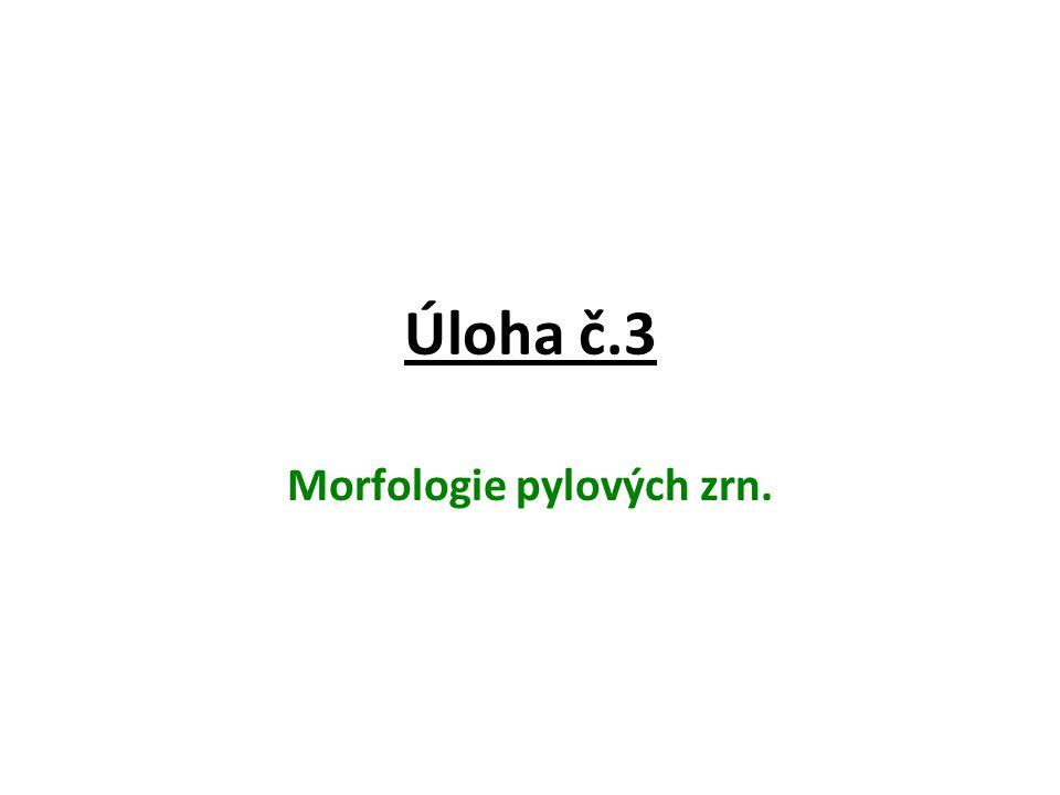 Morfologie pylových zrn.