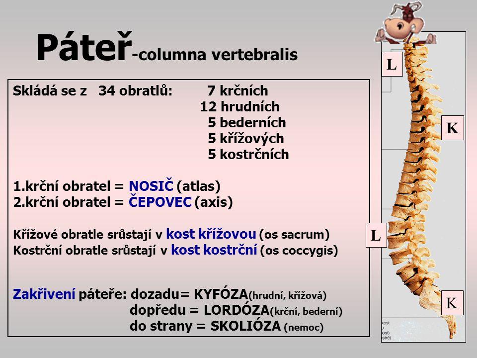 Páteř-columna vertebralis