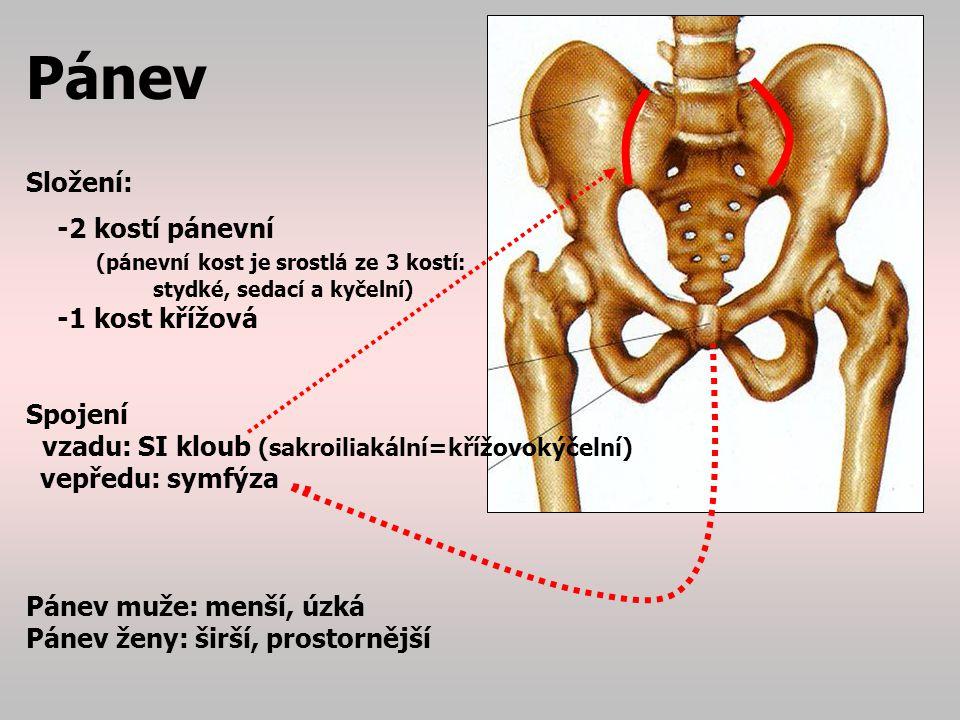 Pánev Složení: -2 kostí pánevní (pánevní kost je srostlá ze 3 kostí: