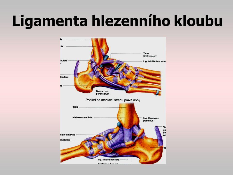 Ligamenta hlezenního kloubu