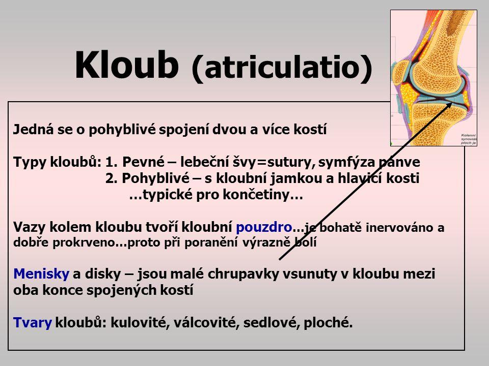 Kloub (atriculatio) Jedná se o pohyblivé spojení dvou a více kostí