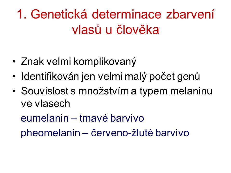 1. Genetická determinace zbarvení vlasů u člověka