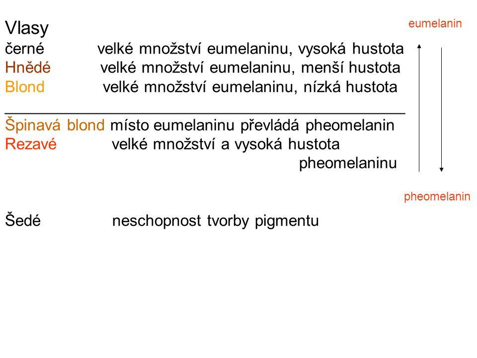 Vlasy černé velké množství eumelaninu, vysoká hustota