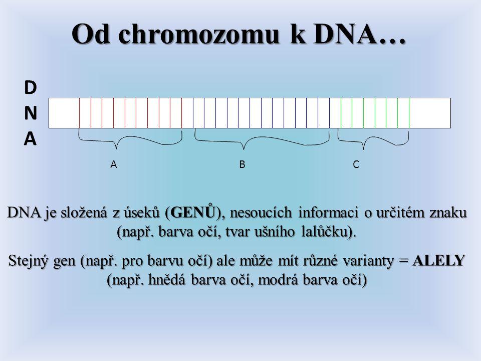 Od chromozomu k DNA… DNA