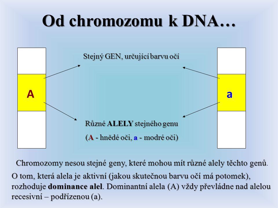 Od chromozomu k DNA… Stejný GEN, určující barvu očí. A. a. Různé ALELY stejného genu. (A - hnědé oči, a - modré oči)