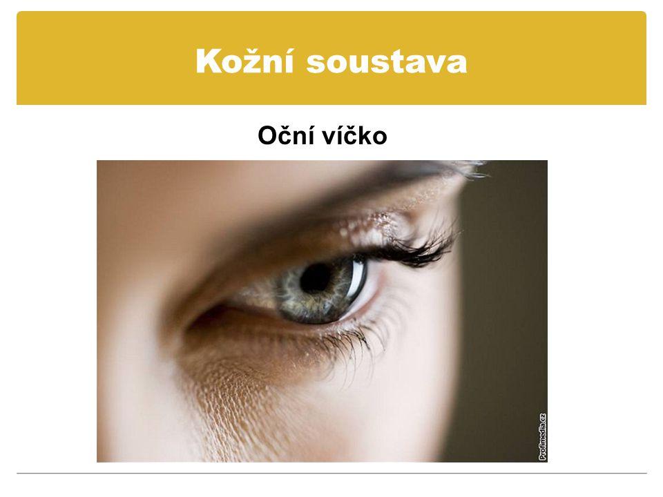 Kožní soustava Oční víčko