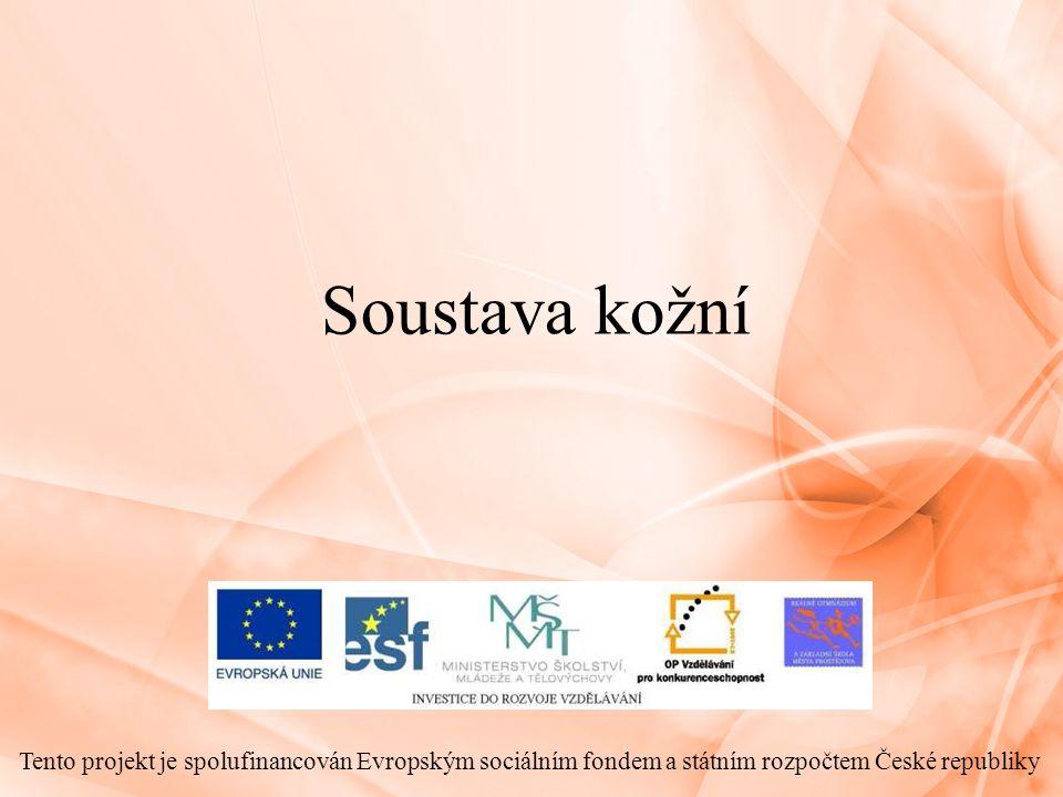 Soustava kožní Tento projekt je spolufinancován Evropským sociálním fondem a státním rozpočtem České republiky.