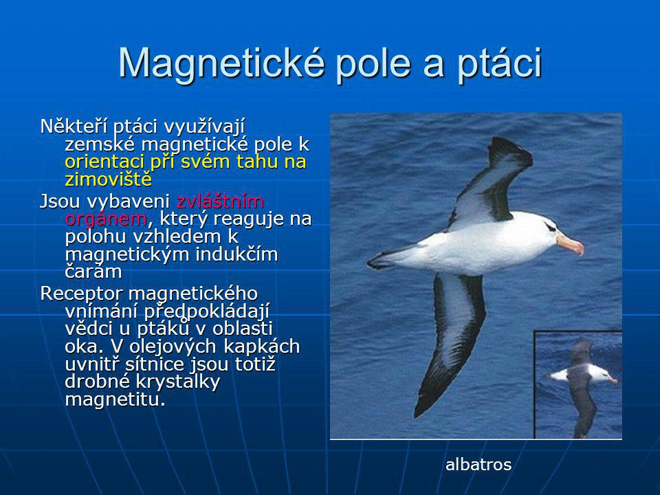Magnetické pole a ptáci