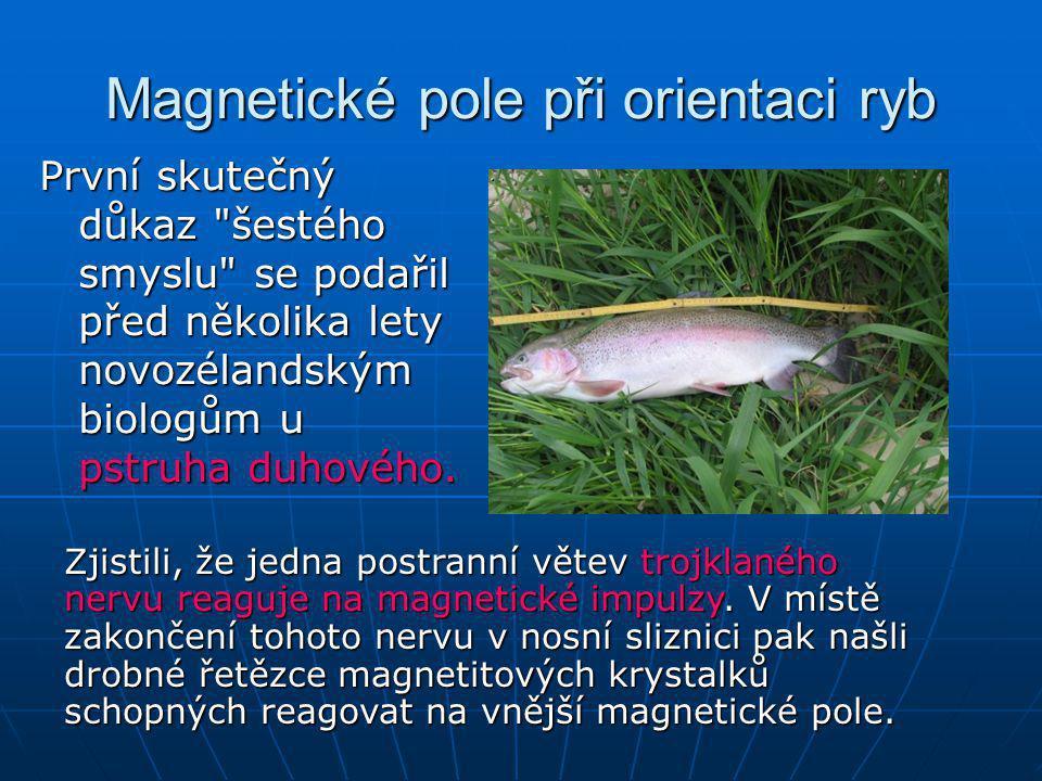 Magnetické pole při orientaci ryb
