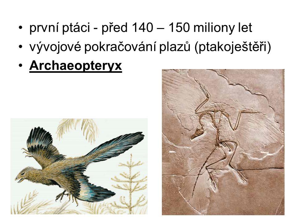 první ptáci - před 140 – 150 miliony let