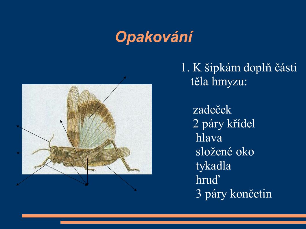 Opakování 1. K šipkám doplň části těla hmyzu: zadeček 2 páry křídel