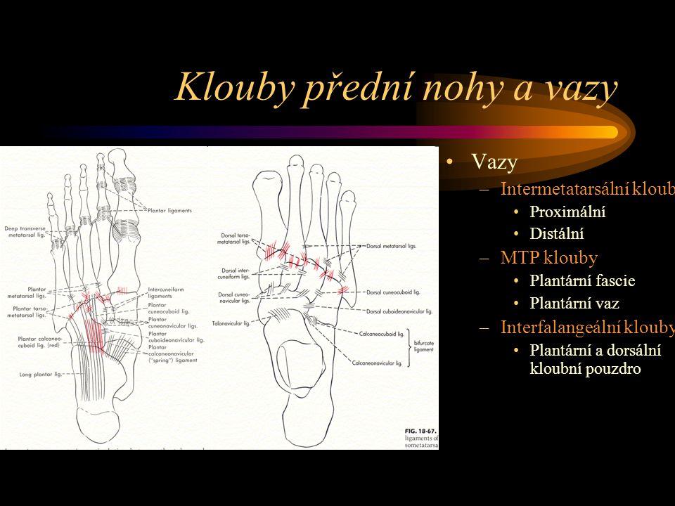 Klouby přední nohy a vazy