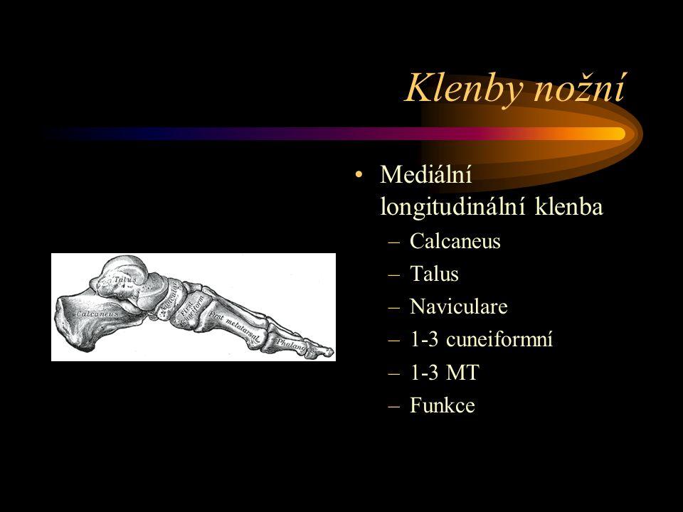 Klenby nožní Mediální longitudinální klenba Calcaneus Talus Naviculare