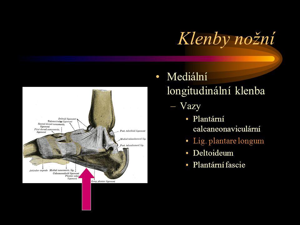 Klenby nožní Mediální longitudinální klenba Vazy