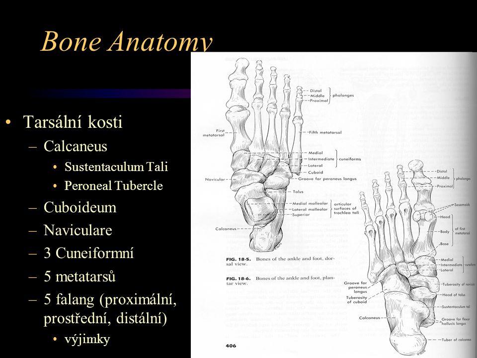 Bone Anatomy Tarsální kosti Calcaneus Cuboideum Naviculare
