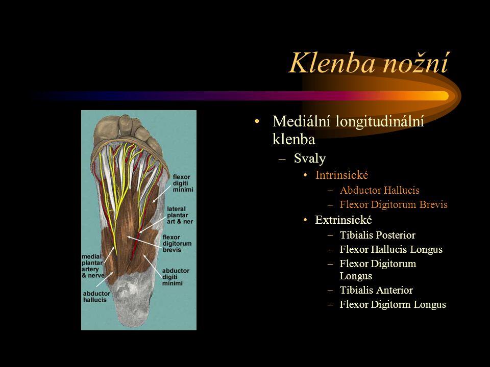 Klenba nožní Mediální longitudinální klenba Svaly Intrinsické