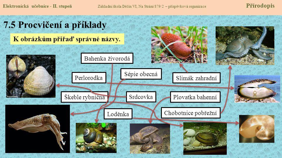 7.5 Procvičení a příklady K obrázkům přiřaď správné názvy.