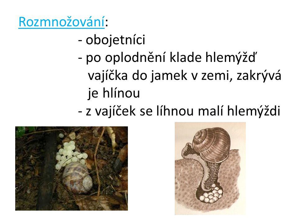 Rozmnožování: - obojetníci. - po oplodnění klade hlemýžď vajíčka do jamek v zemi, zakrývá je hlínou.