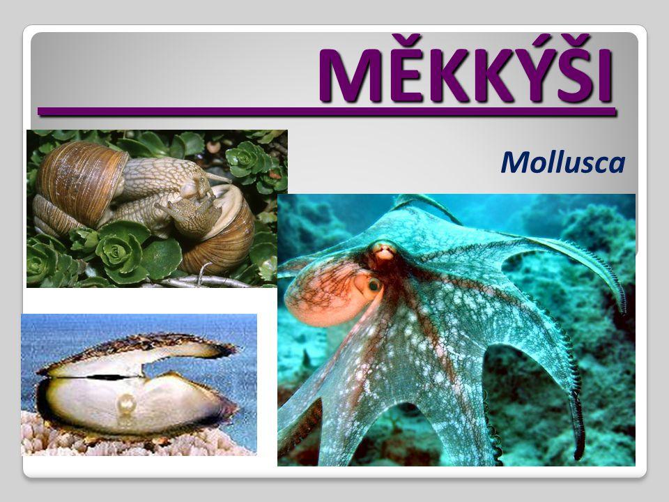 MĚKKÝŠI Mollusca