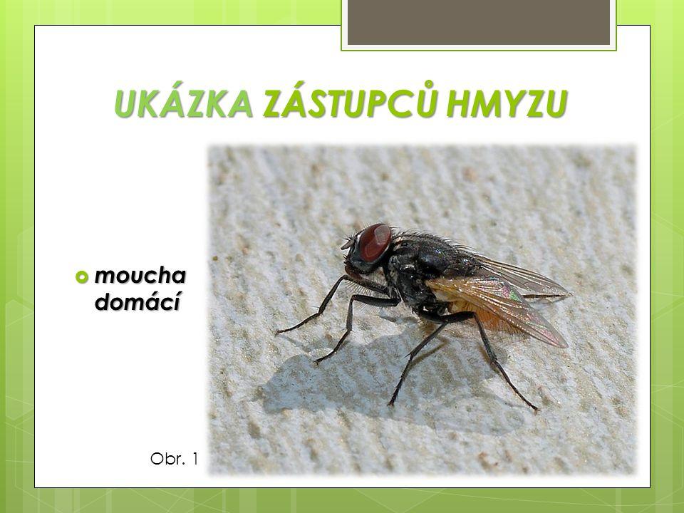 UKÁZKA ZÁSTUPCŮ HMYZU moucha domácí Obr. 1