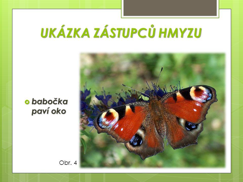 UKÁZKA ZÁSTUPCŮ HMYZU babočka paví oko Obr. 4