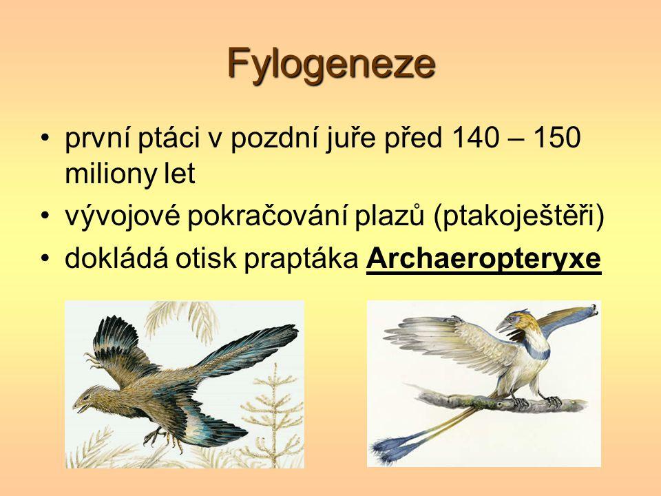 Fylogeneze první ptáci v pozdní juře před 140 – 150 miliony let