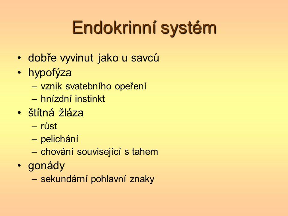 Endokrinní systém dobře vyvinut jako u savců hypofýza štítná žláza