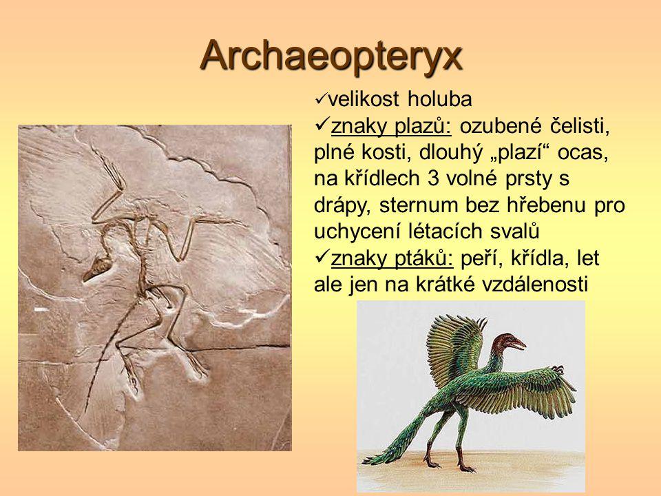 Archaeopteryx velikost holuba.